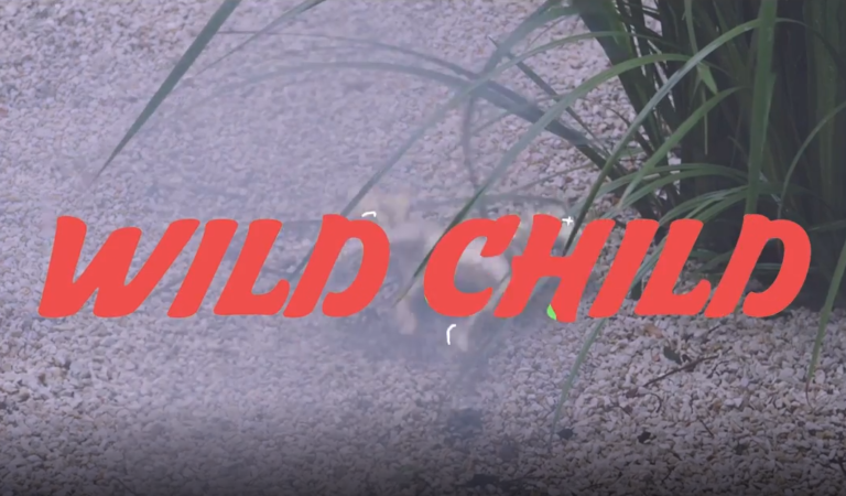 Wild Child – Crazy Bird (by HQG Studios)